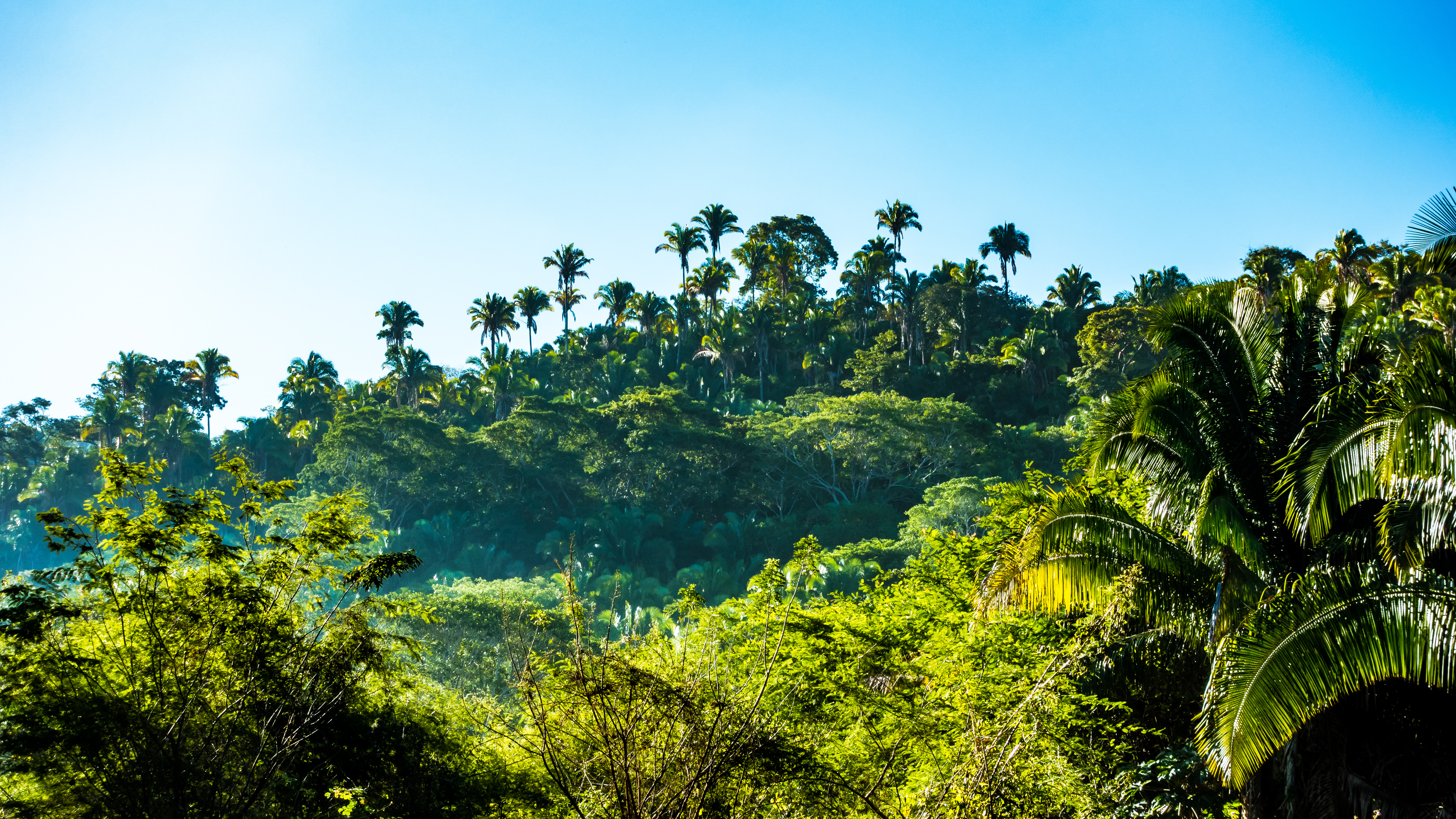 Green Forest Wallpaper Hd 200 Great Jungle Photos 183 Pexels 183 Free Stock Photos