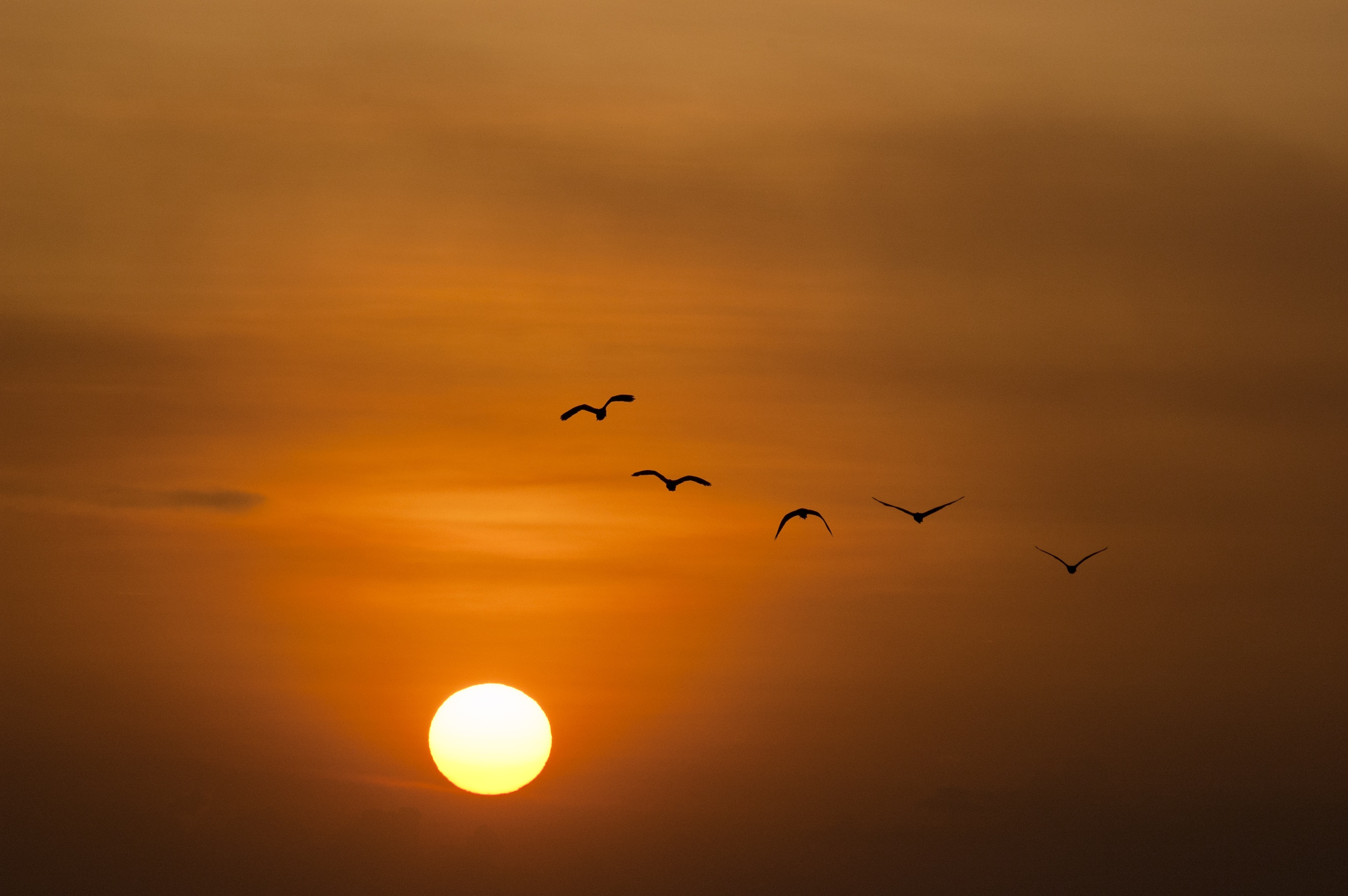 Samsung Galaxy A Hd Wallpaper Birds Silhouette During Sunset 183 Free Stock Photo
