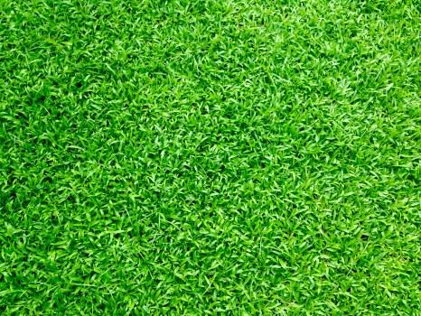Black Apple Wallpaper Free Stock Photos Of Grass 183 Pexels