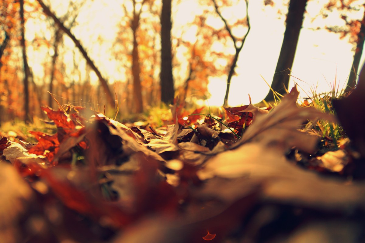 Falling Leaves Wallpaper Free Download Free Stock Photo Of Autumn Autumn Leaves Depth Of Field