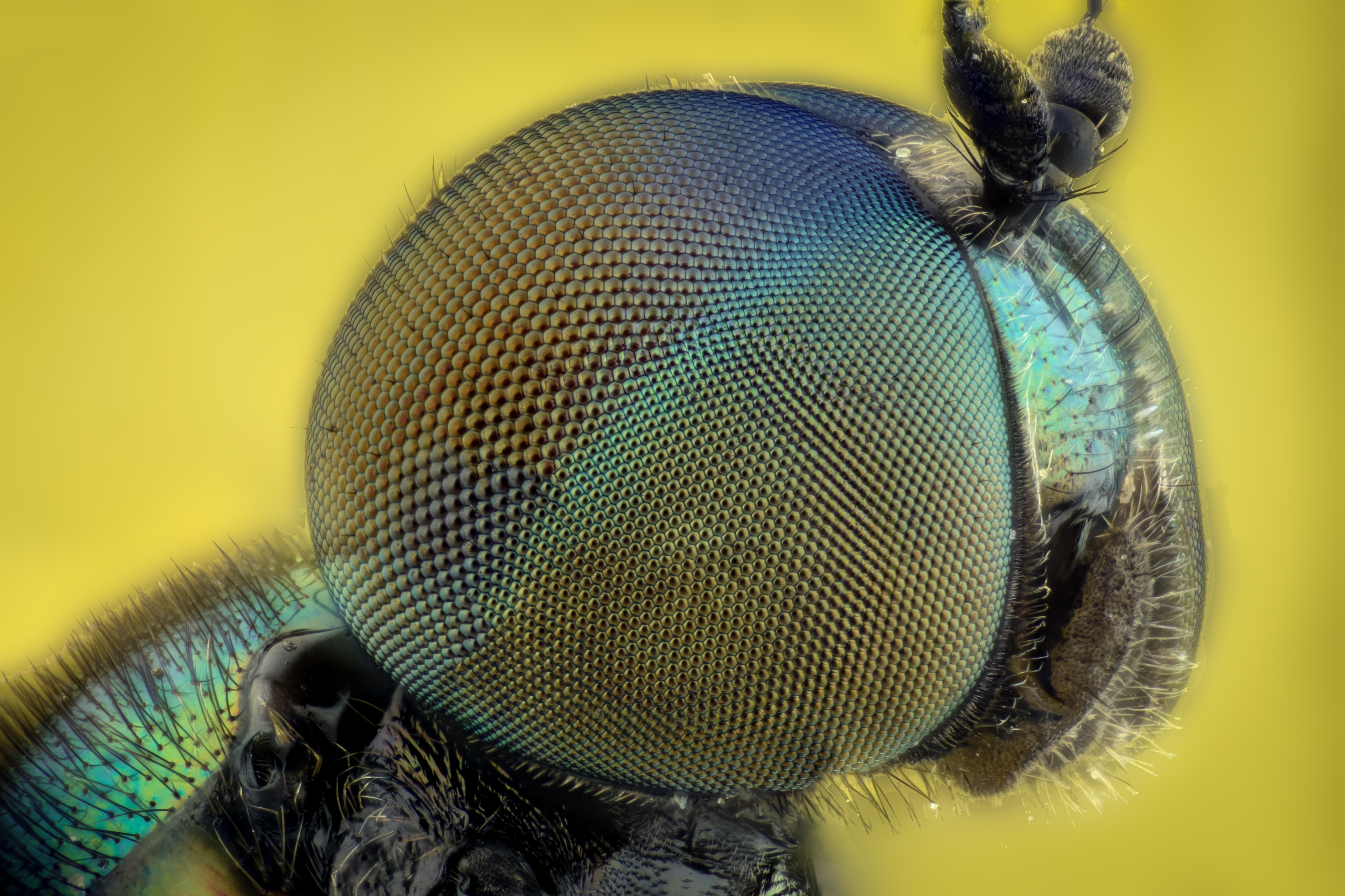 Iphone X Wallpaper Stock Hd Free Stock Photo Of Bug Colors Eyes