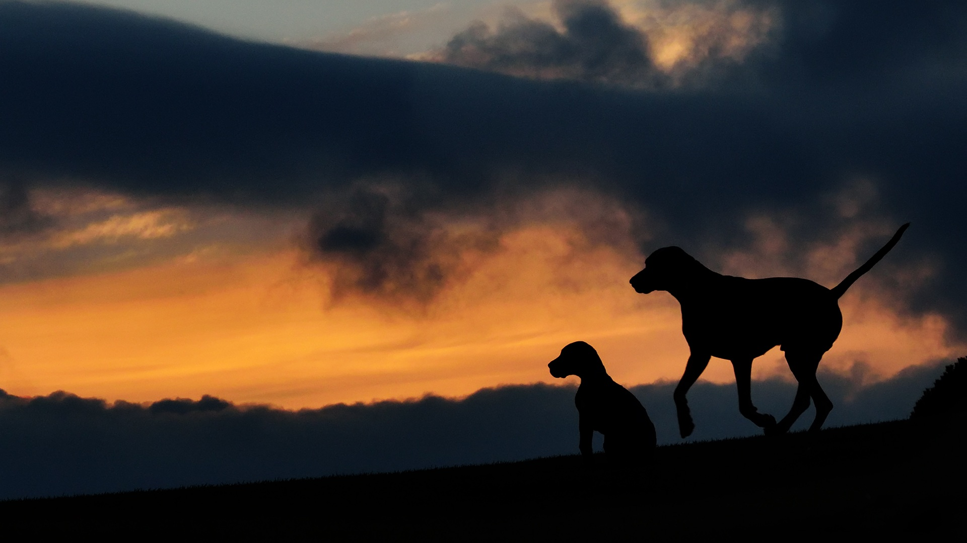 Hd Wallpaper 4k Iphone Free Stock Photo Of Silhouette Sunset Two Dogs