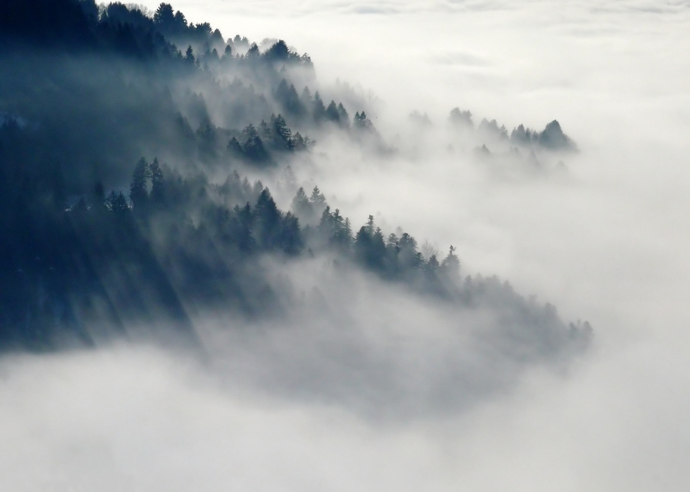 Hd Love Wallpapers For Mobile Free Download Free Stock Photo Of Fog Foggy Forest