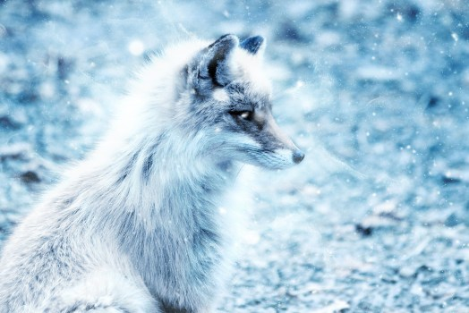 Fox Animal Wallpaper Brown And White Fox On Green Grass Land 183 Free Stock Photo