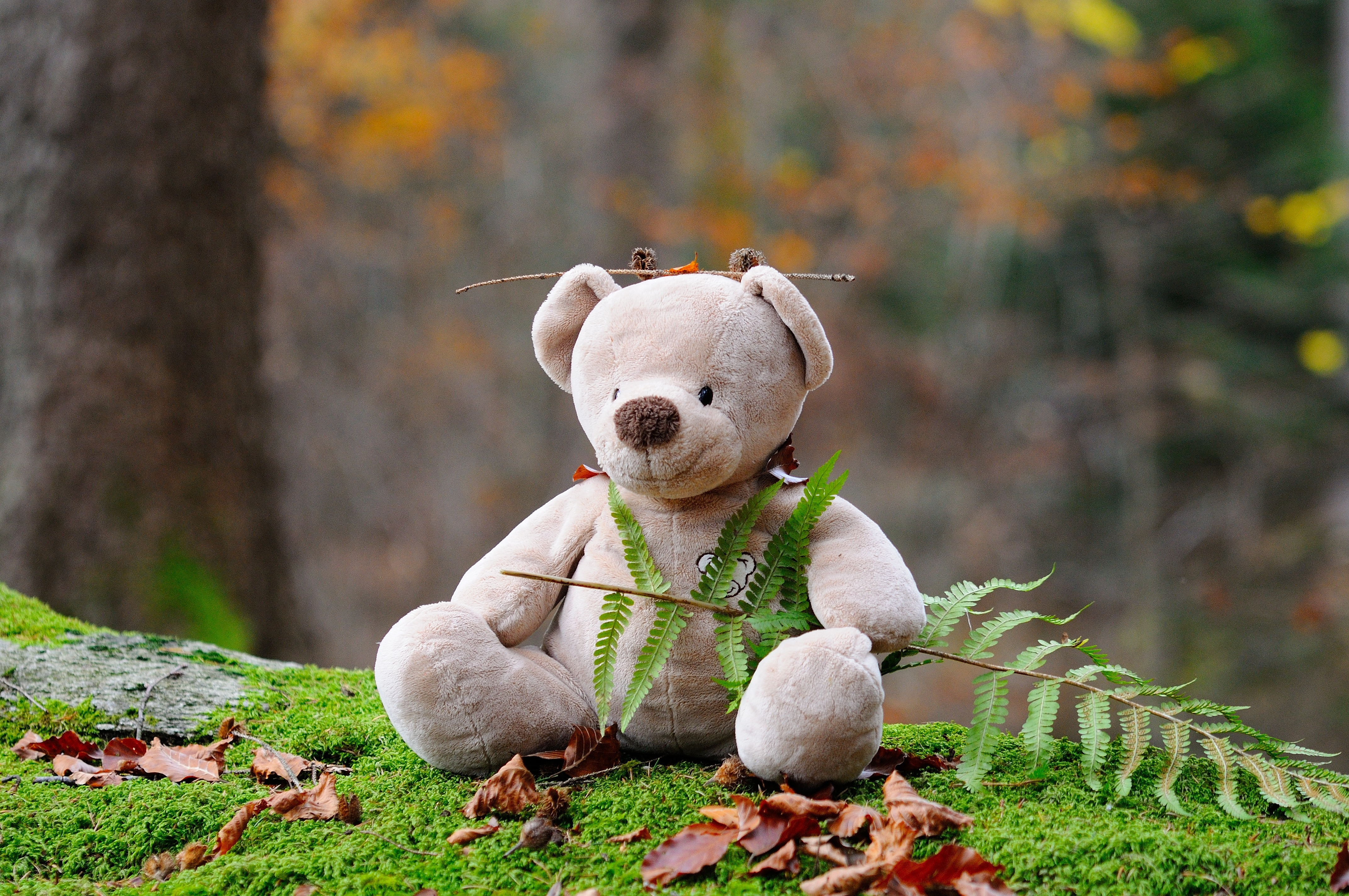 Forest Black And White Wallpaper Brown Teddy Bear On Brown Wooden Bench Outside 183 Free