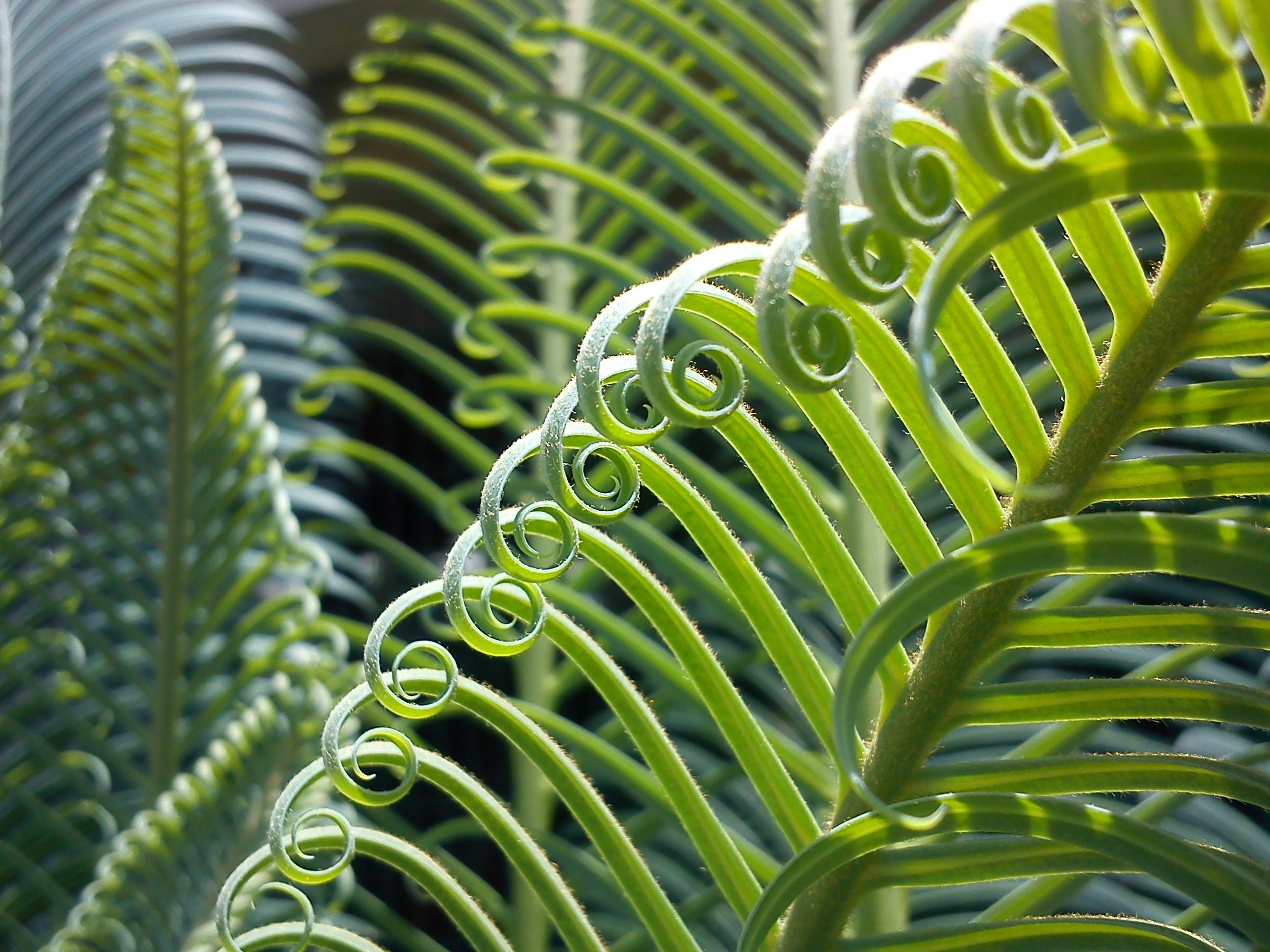 Lock Screen Wallpaper Iphone X Green Curly Plant 183 Free Stock Photo