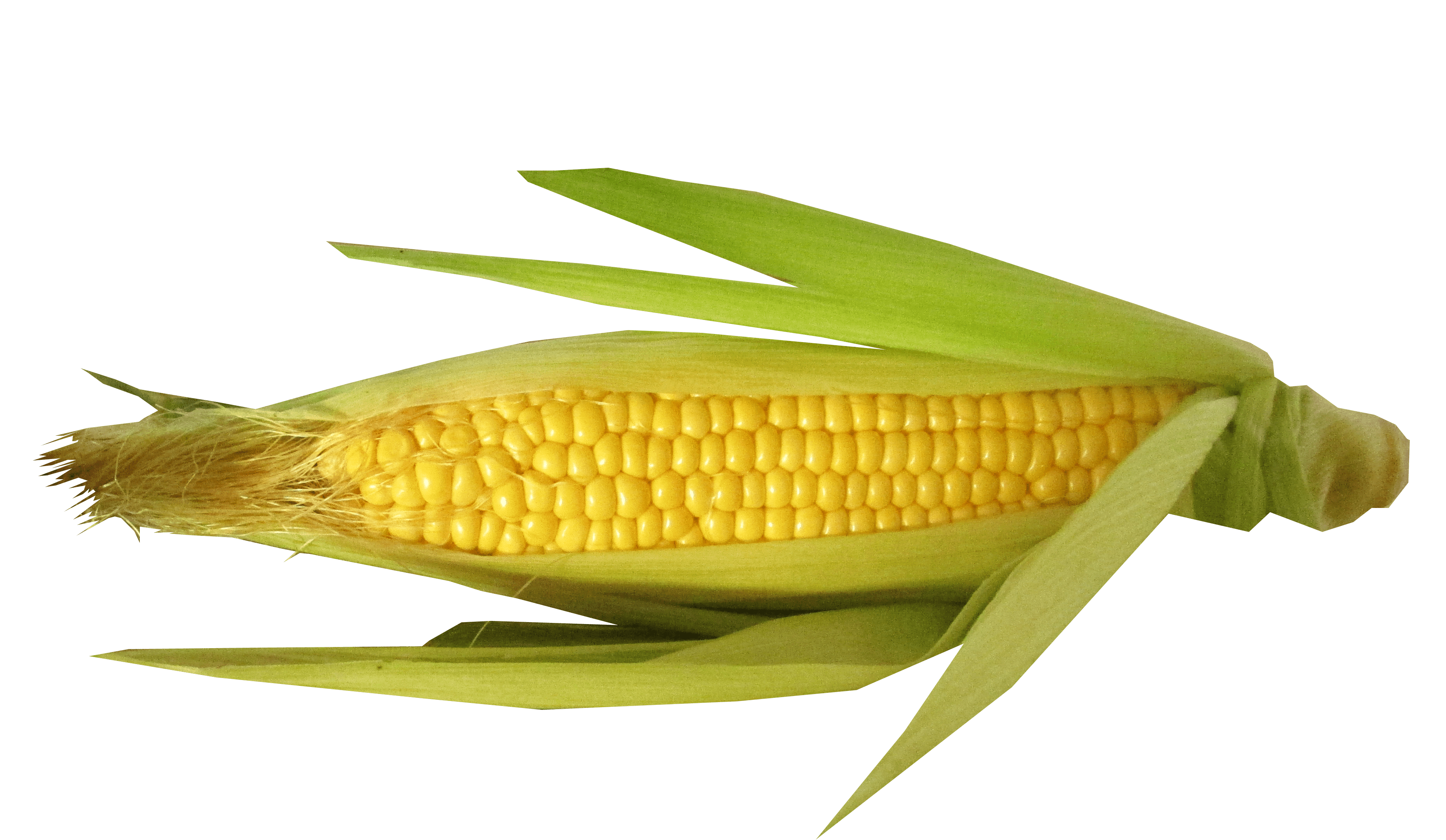 Samsung Galaxy A Hd Wallpaper Free Stock Photo Of Corn Cut Out