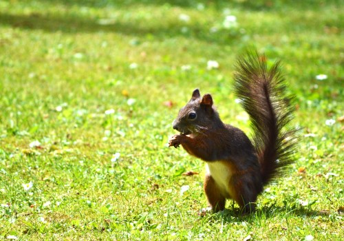 Cute Animal Wallpapers Free Download Brown Squirrel 183 Free Stock Photo