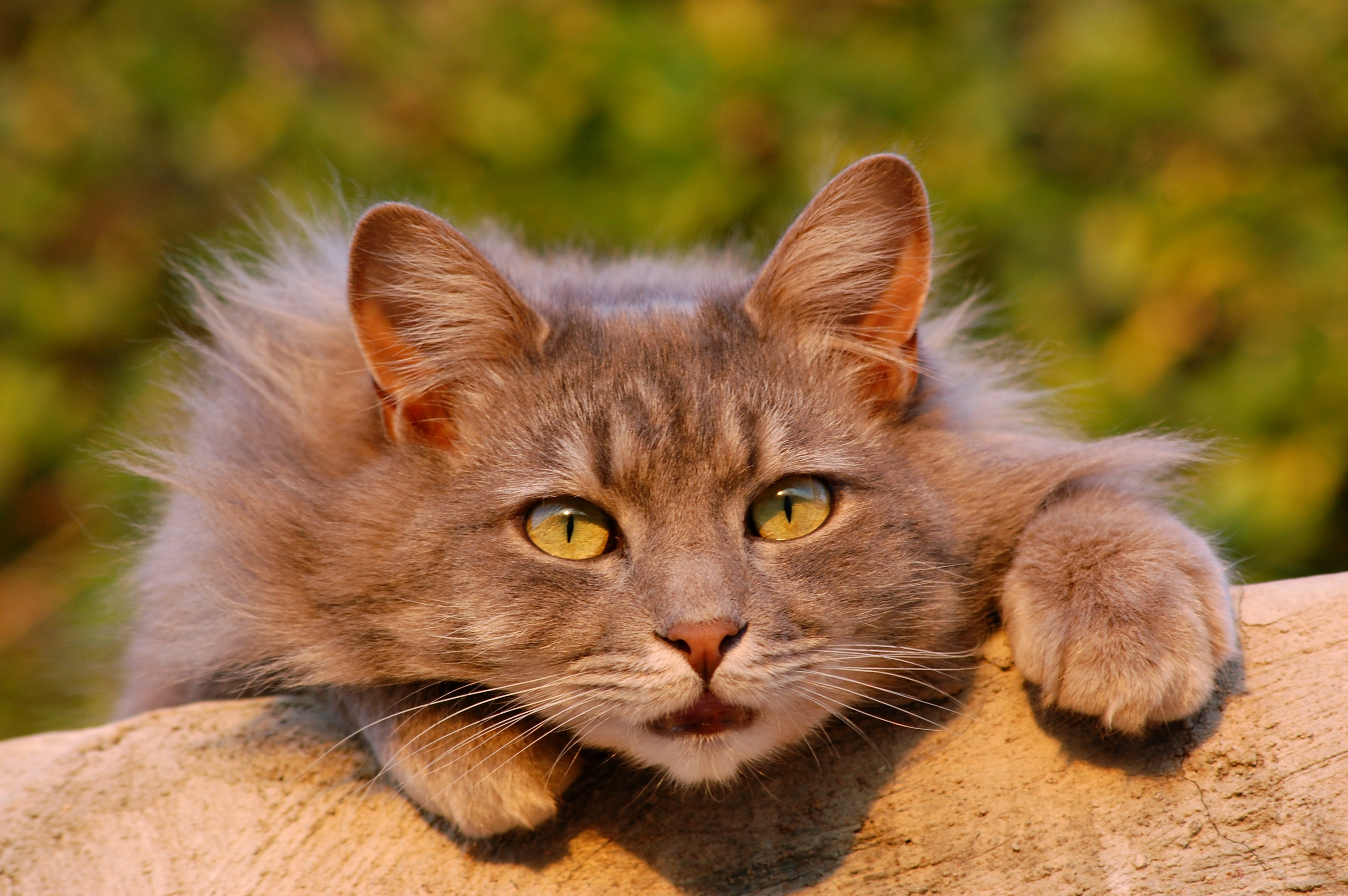 Cute Kitty Wallpapers Free Free Stock Photo Of Animal Cat Cc0