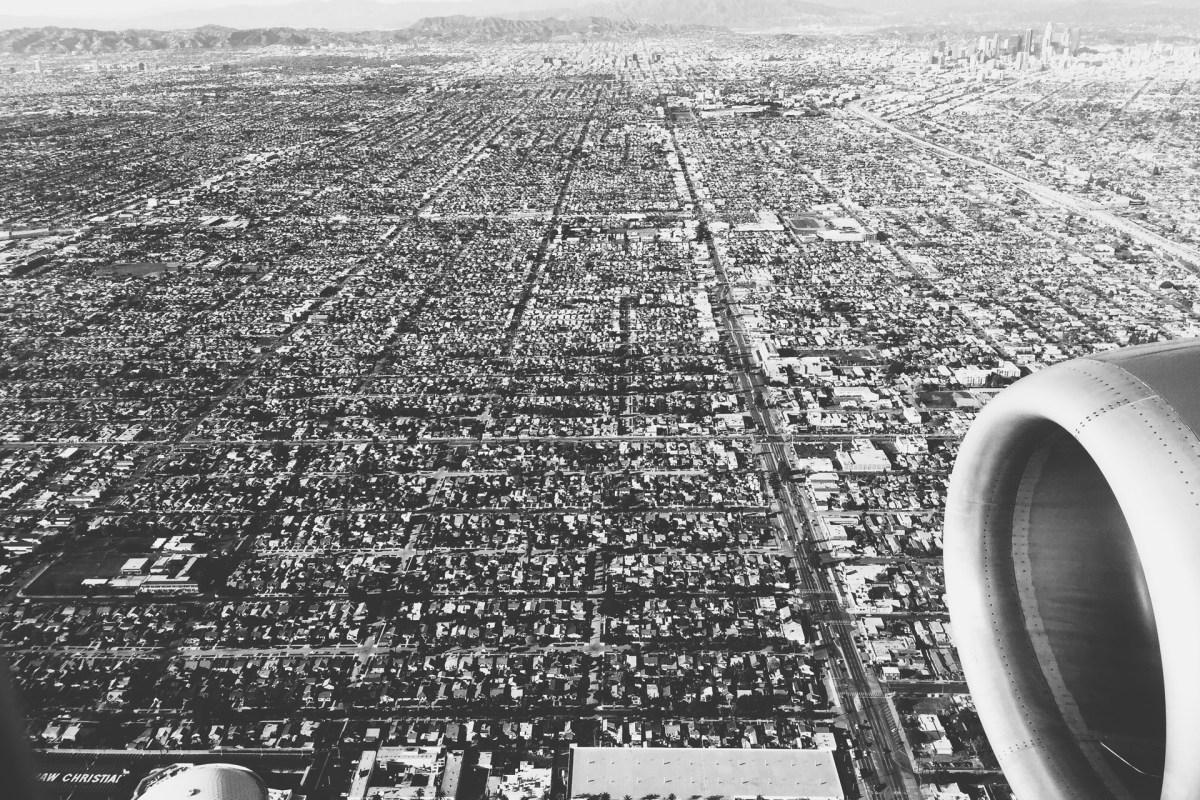 Black Dog Wallpaper Free Stock Photo Of Black And White City Flight