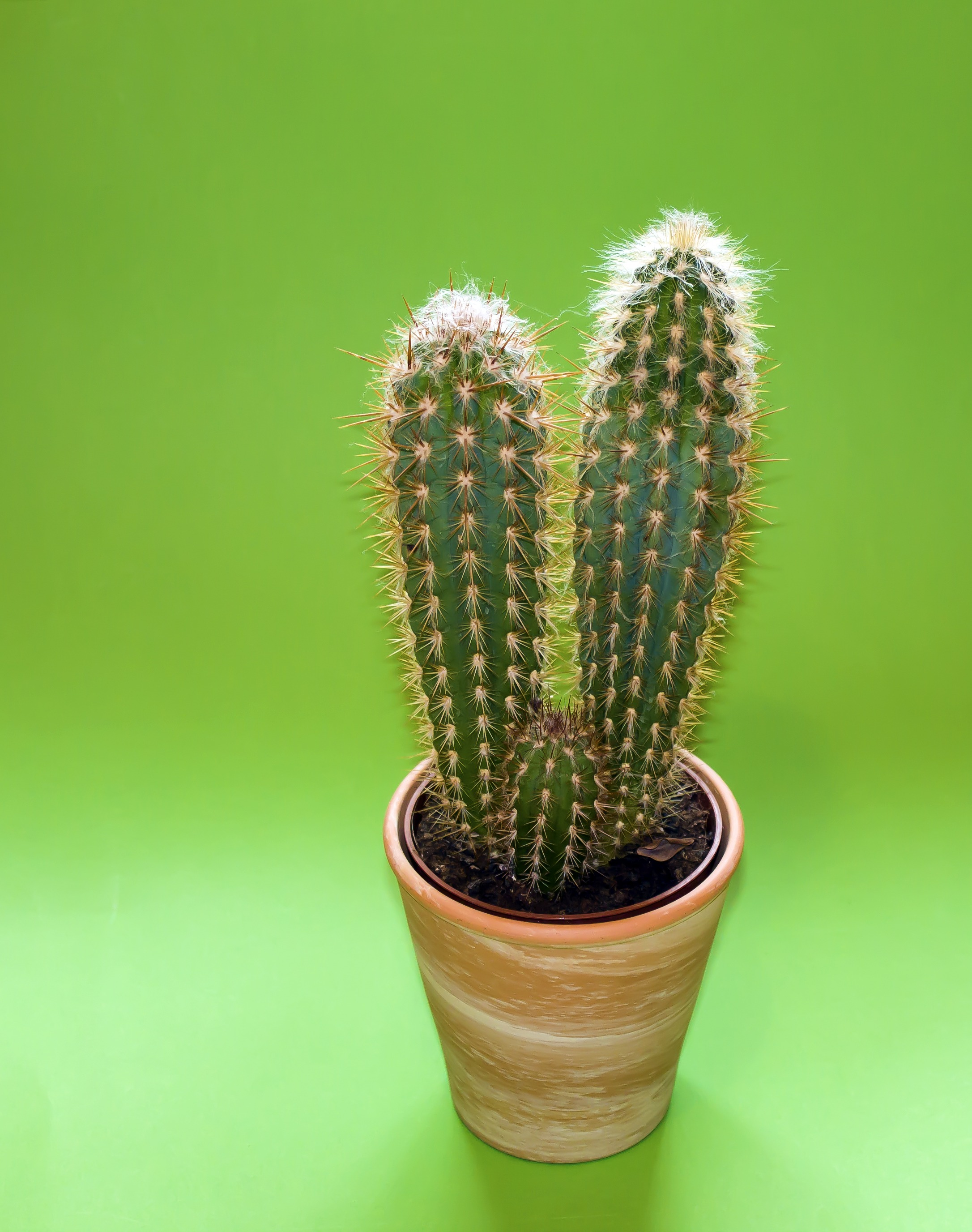 Best Iphone 4 Hd Wallpapers Cactus Plant On Brown Pot 183 Free Stock Photo