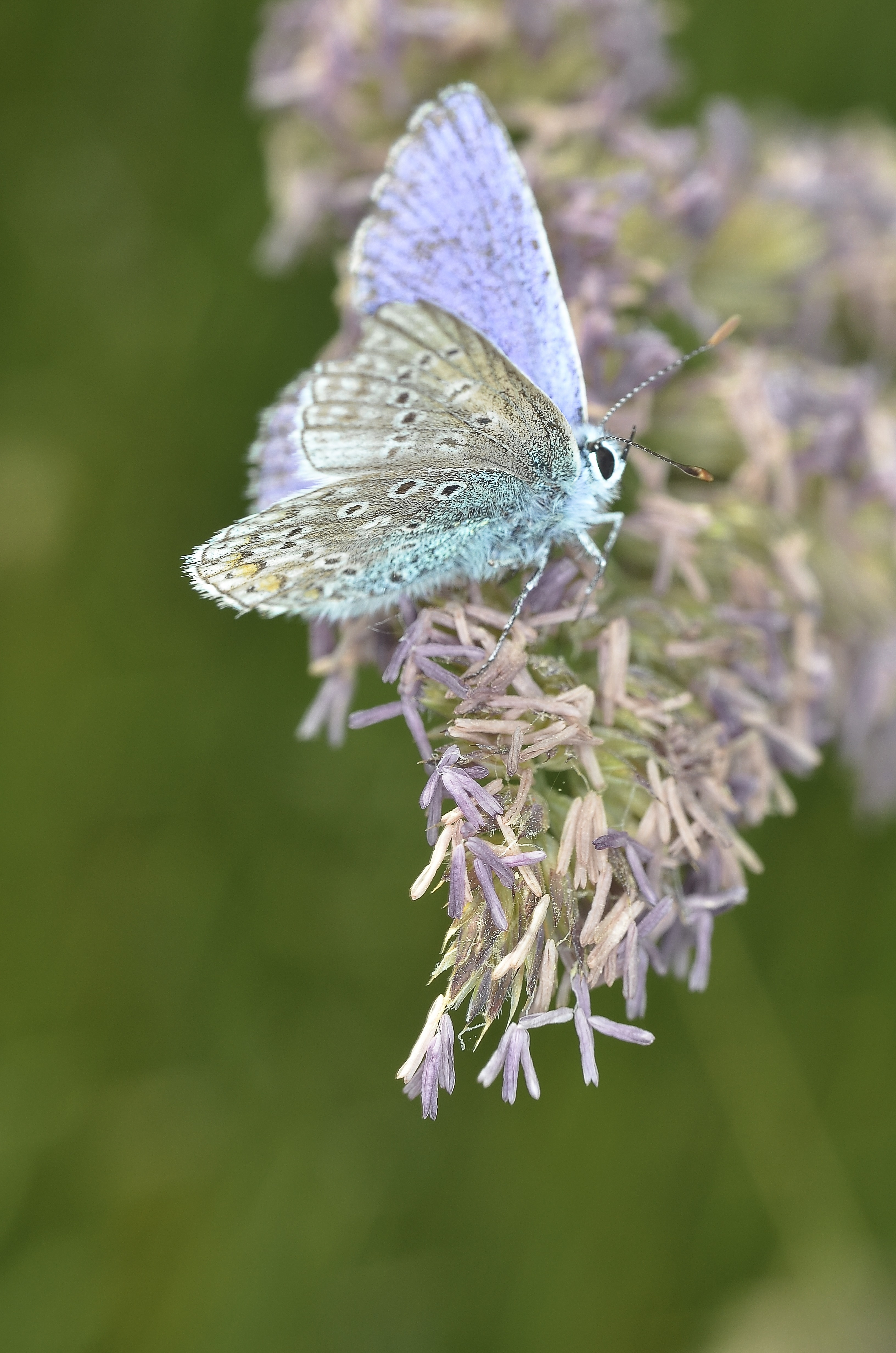More Wallpaper For Iphone X Purple White Butterfly On Purple Petaled Flower During
