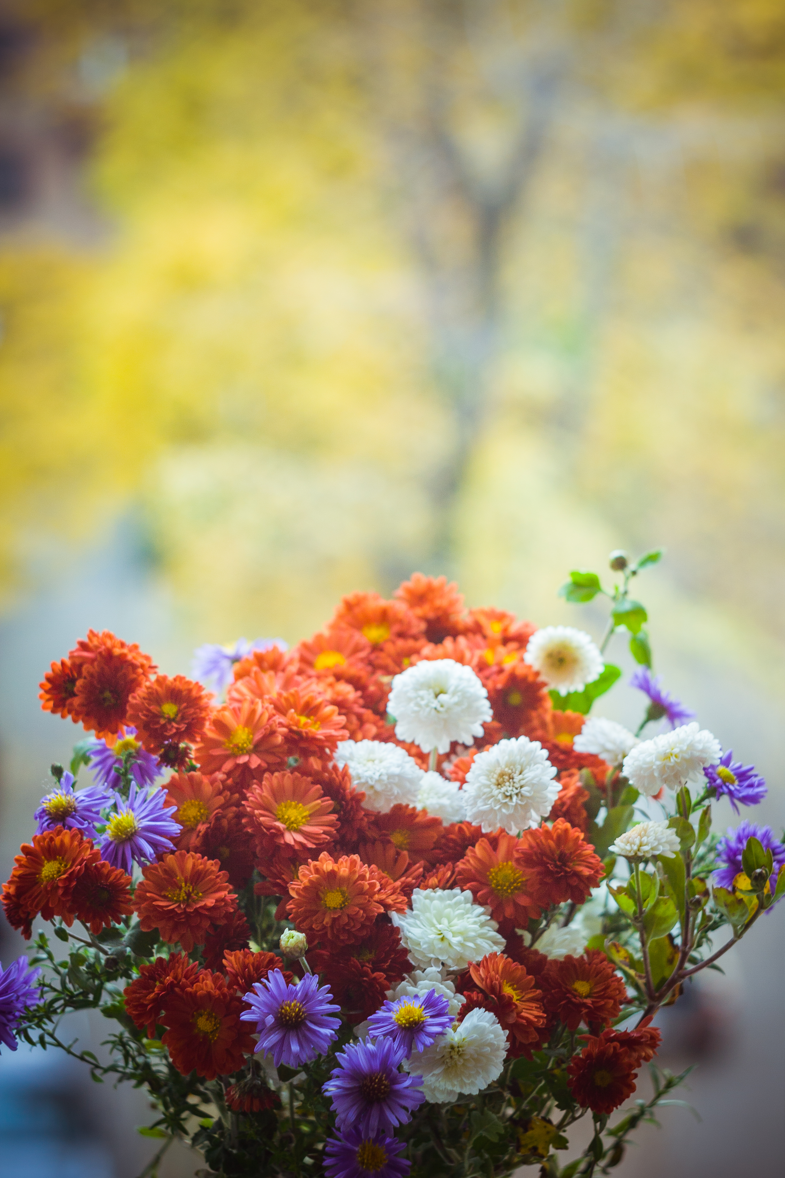 Beautiful Wallpapers For Iphone 6 Plus Close Up Photography Flowers In A Vase 183 Free Stock Photo