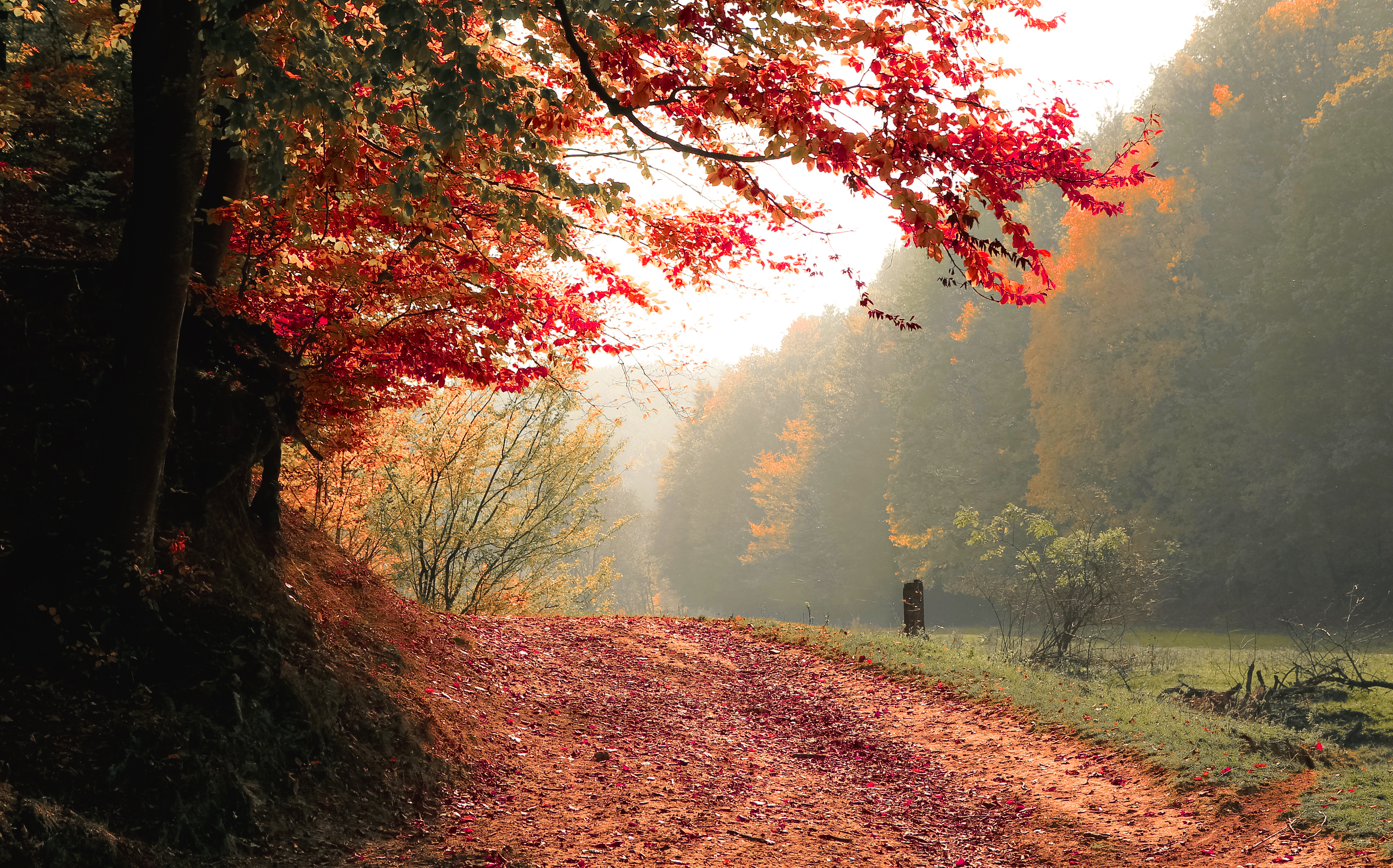 Desktop Wallpaper Fall Images Free Stock Photo Of Autumn Daylight Fall