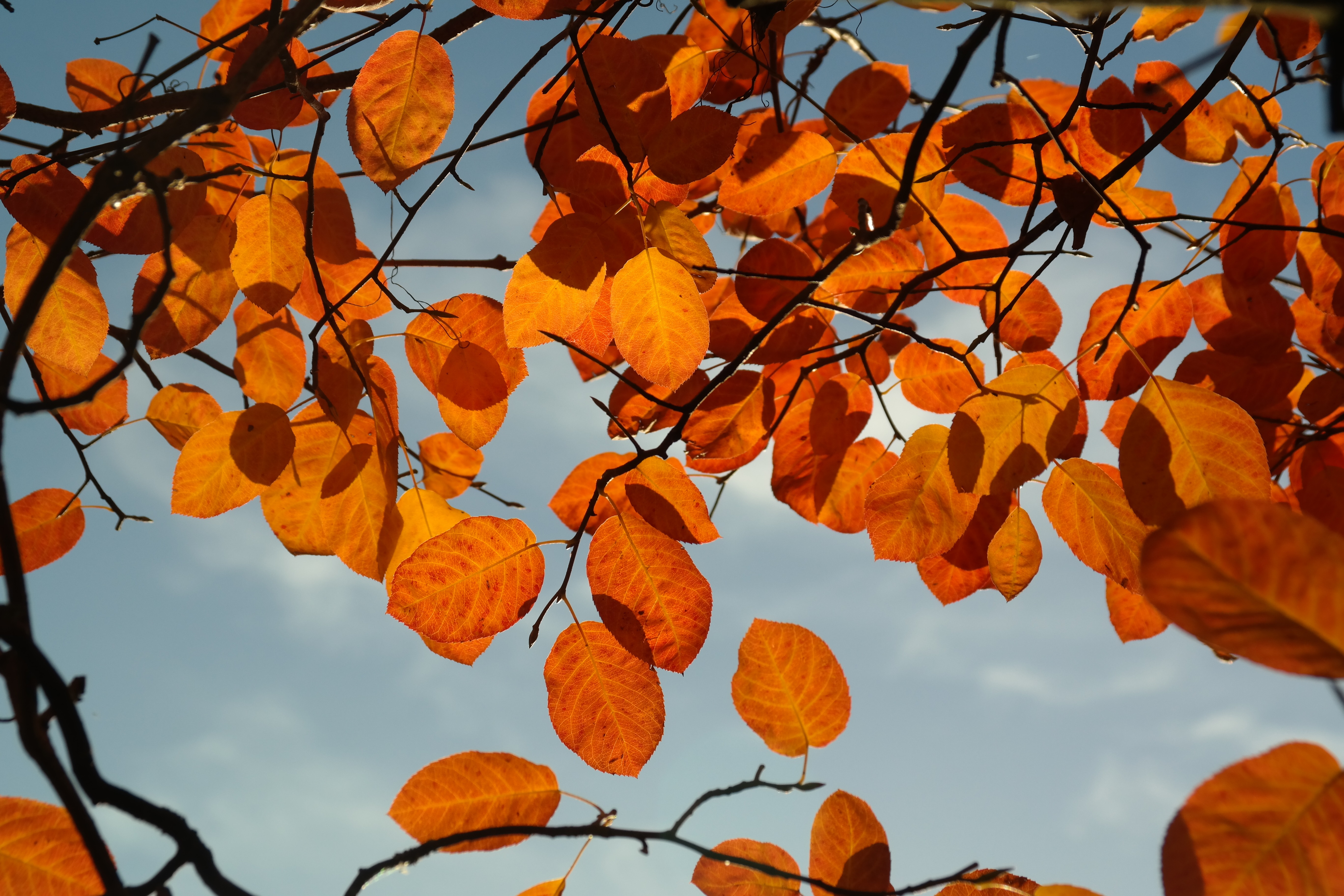 Fall In Love Leaf Wallpaper Orange Leaves During Daylight 183 Free Stock Photo
