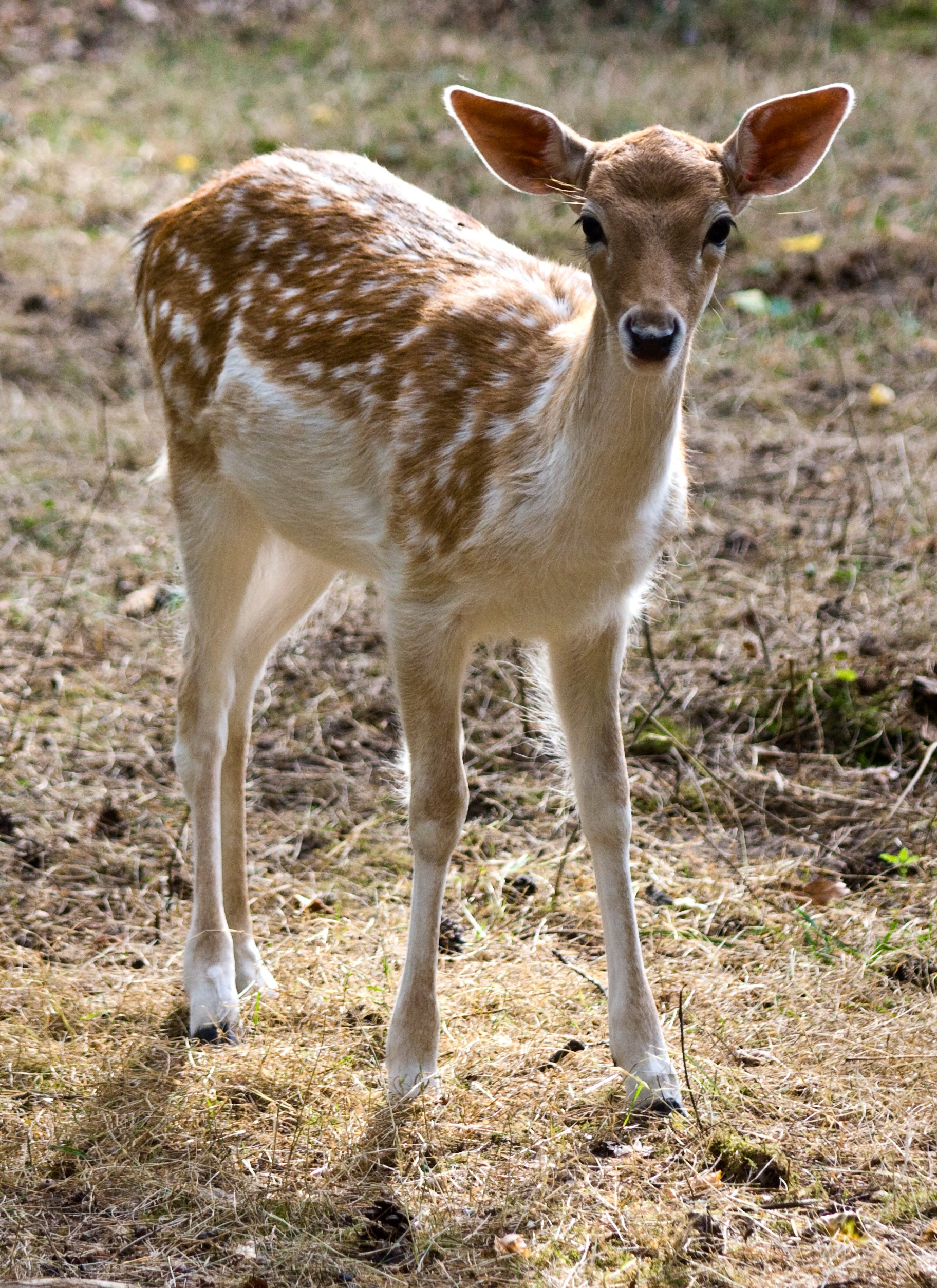 Free Animal Wallpaper Download Free Stock Photo Of Animals Deers Forest