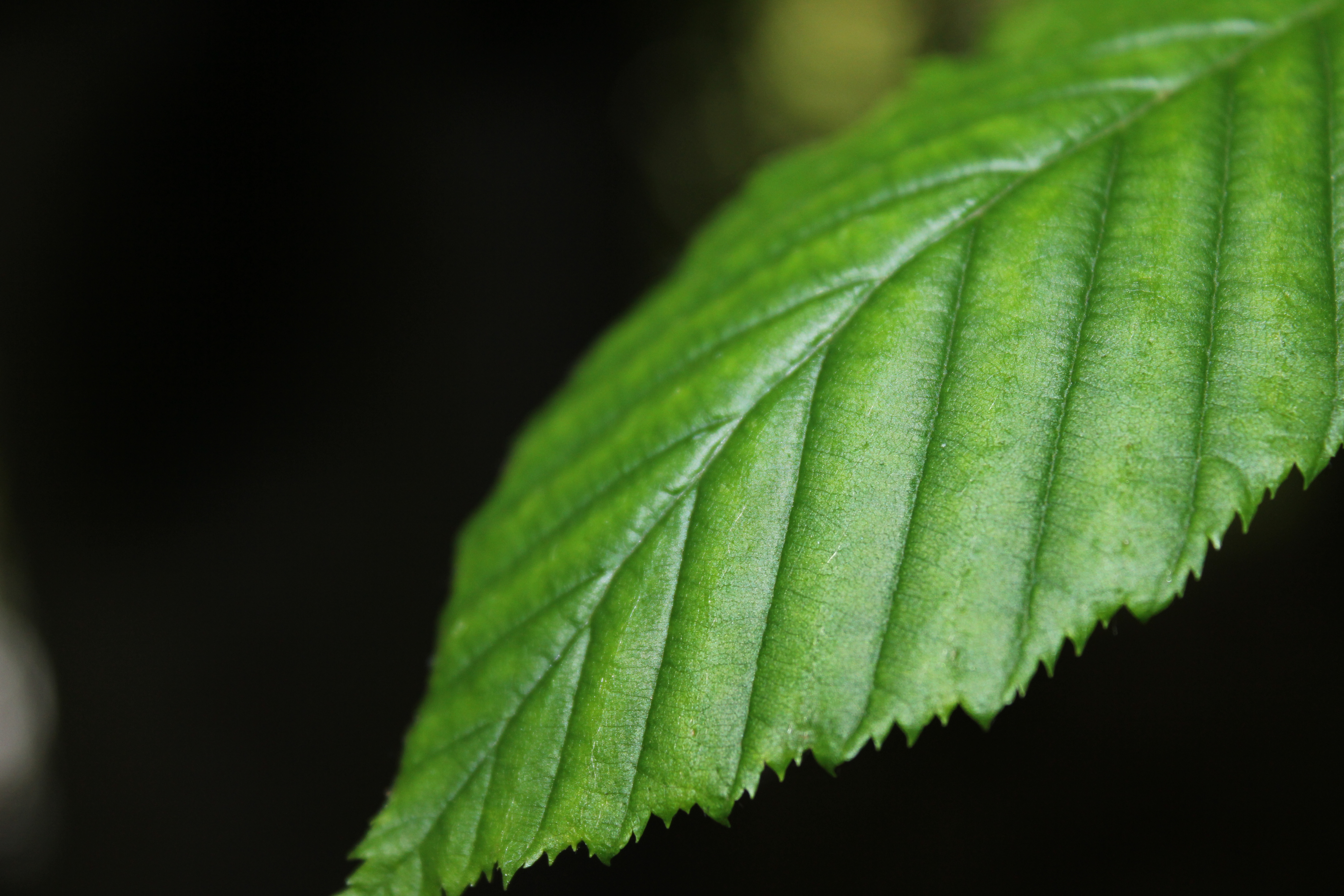 Best Iphone 4 Wallpapers Hd Green Leaf Plant 183 Free Stock Photo