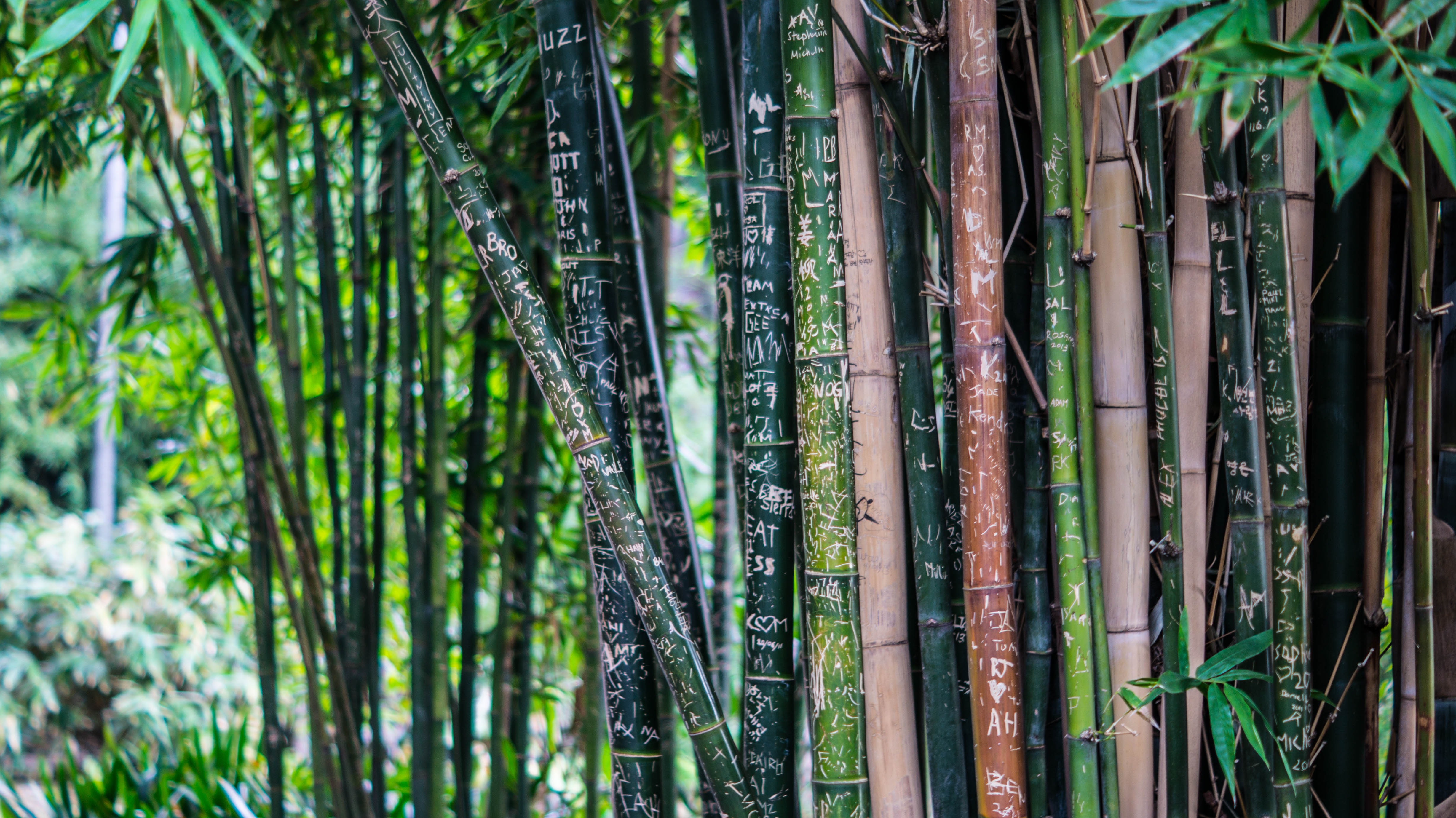 Iphone 8 X Wallpaper Green Leaf Bamboo Tree At Daytime 183 Free Stock Photo