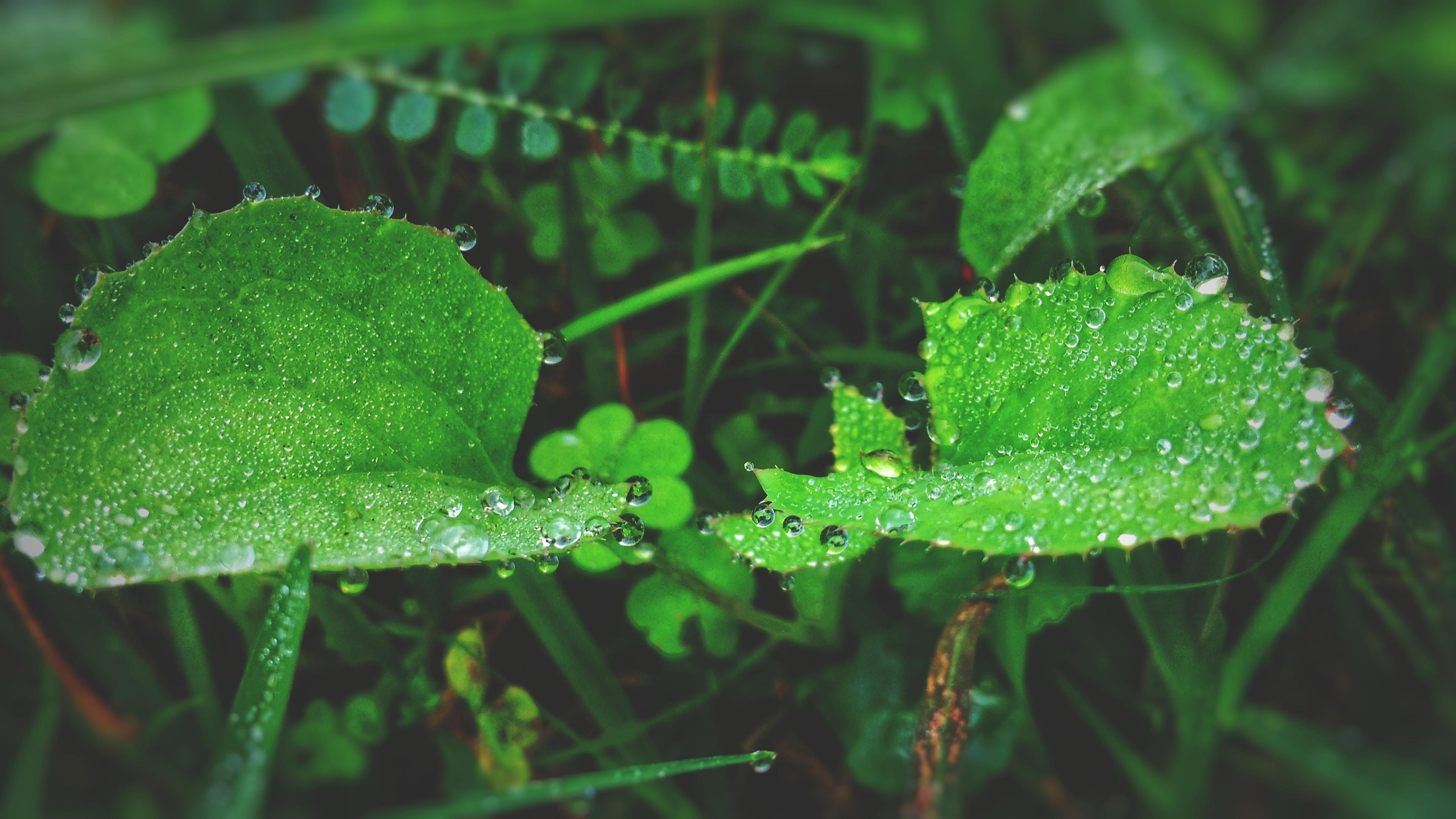 Windows 7 Wallpaper Hd Macro Photography Of Green Leaf Plant 183 Free Stock Photo