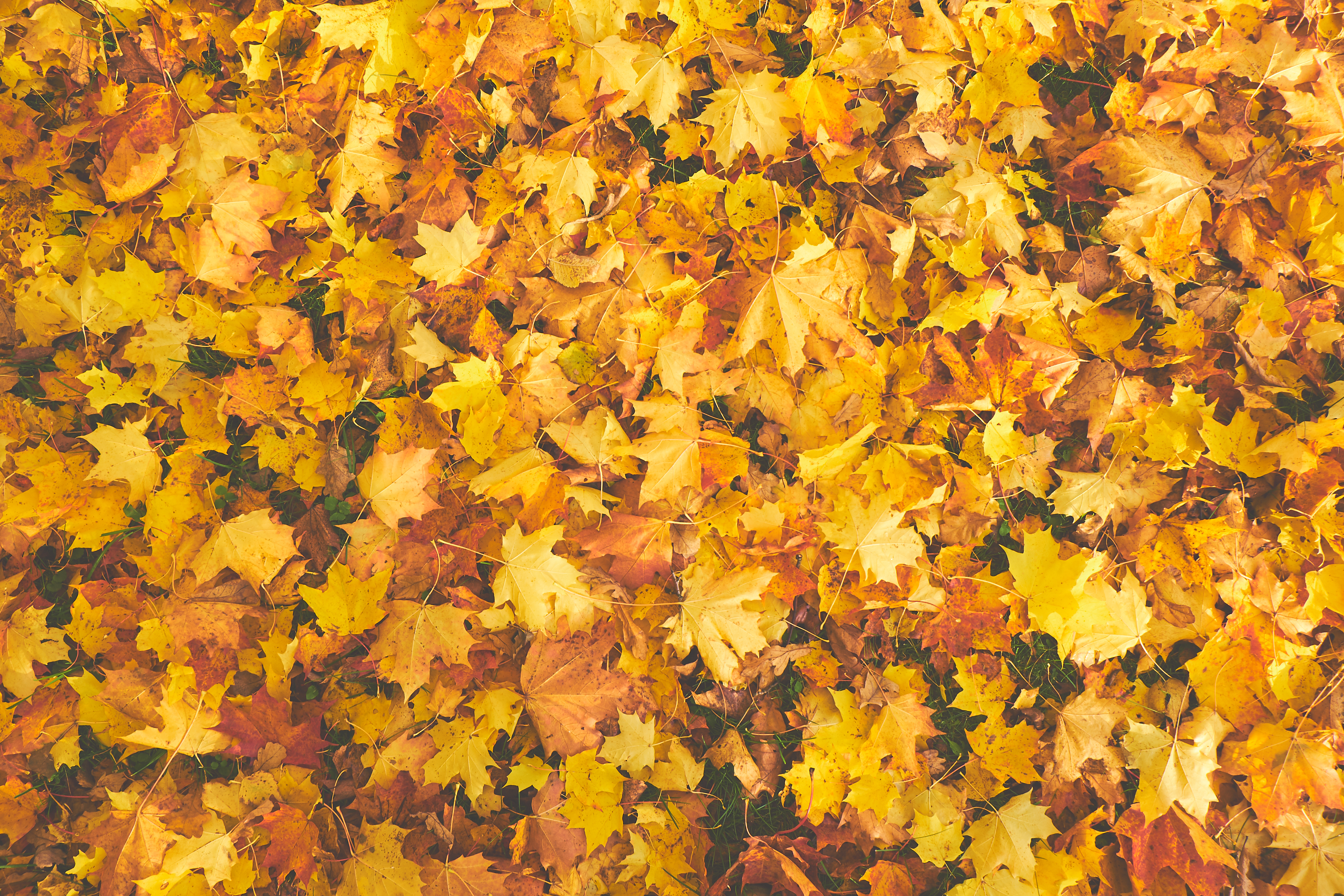 Free Fall Wallpaper Apps 1000 Interesting Fall Leaves Photos 183 Pexels 183 Free Stock