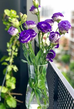 Happy New Year Wallpaper Iphone 6 1000 Beautiful Beautiful Flowers Photos 183 Pexels 183 Free