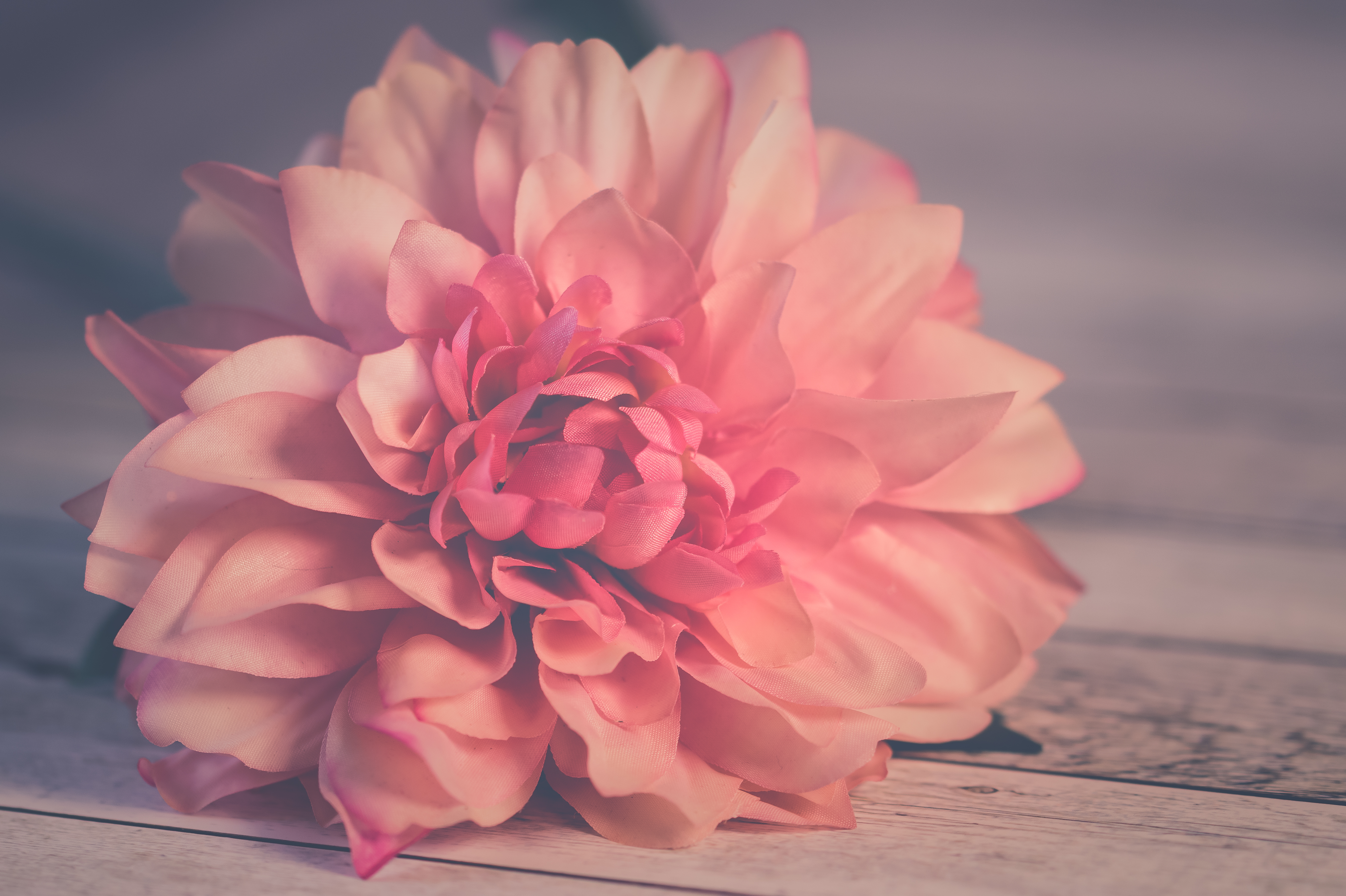 Pink Fall Wallpaper Hd 1000 Great Flower Background Photos 183 Pexels 183 Free Stock