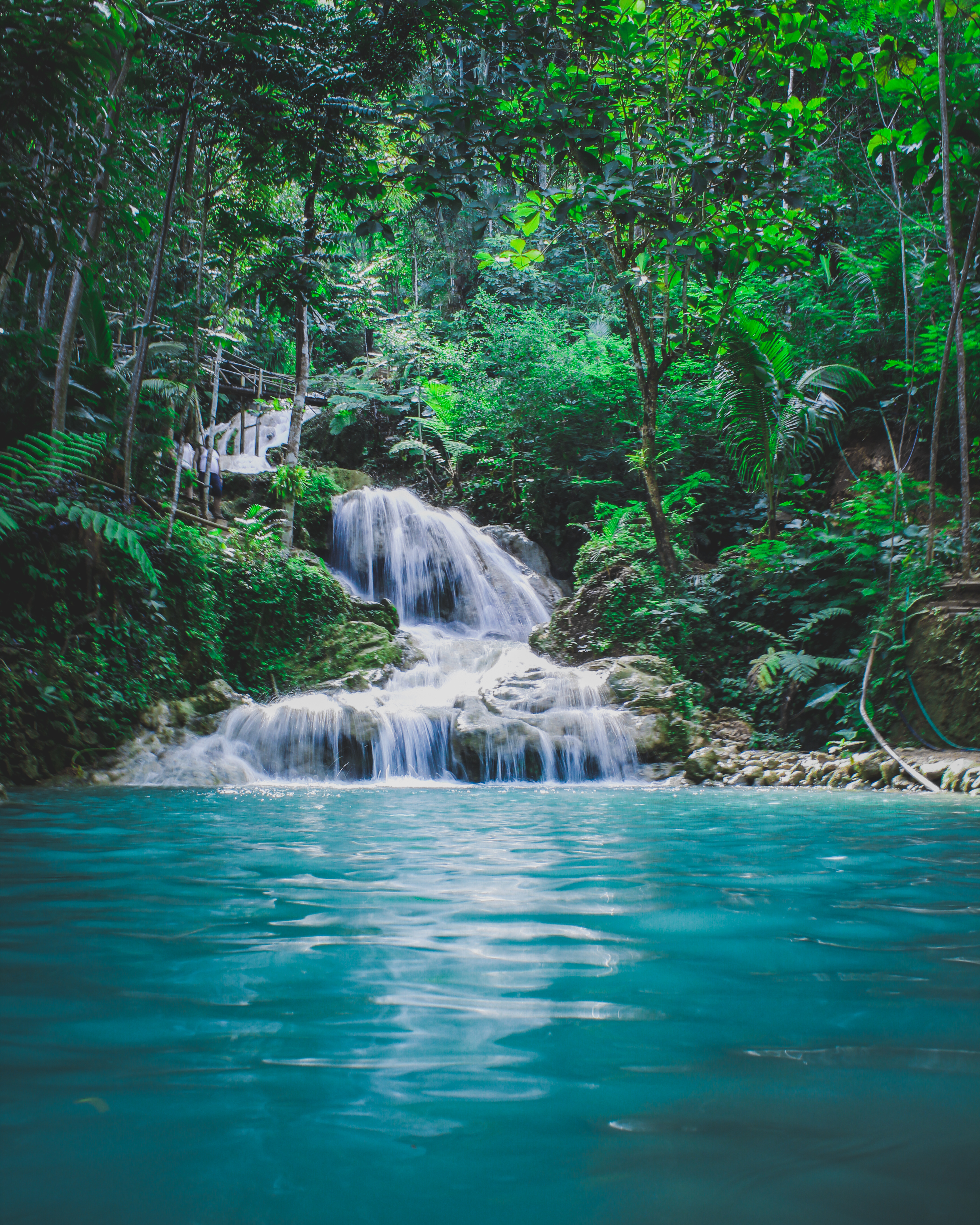 Iphone 6 Wallpaper Size Free Stock Photo Of Forest Jungle Nature