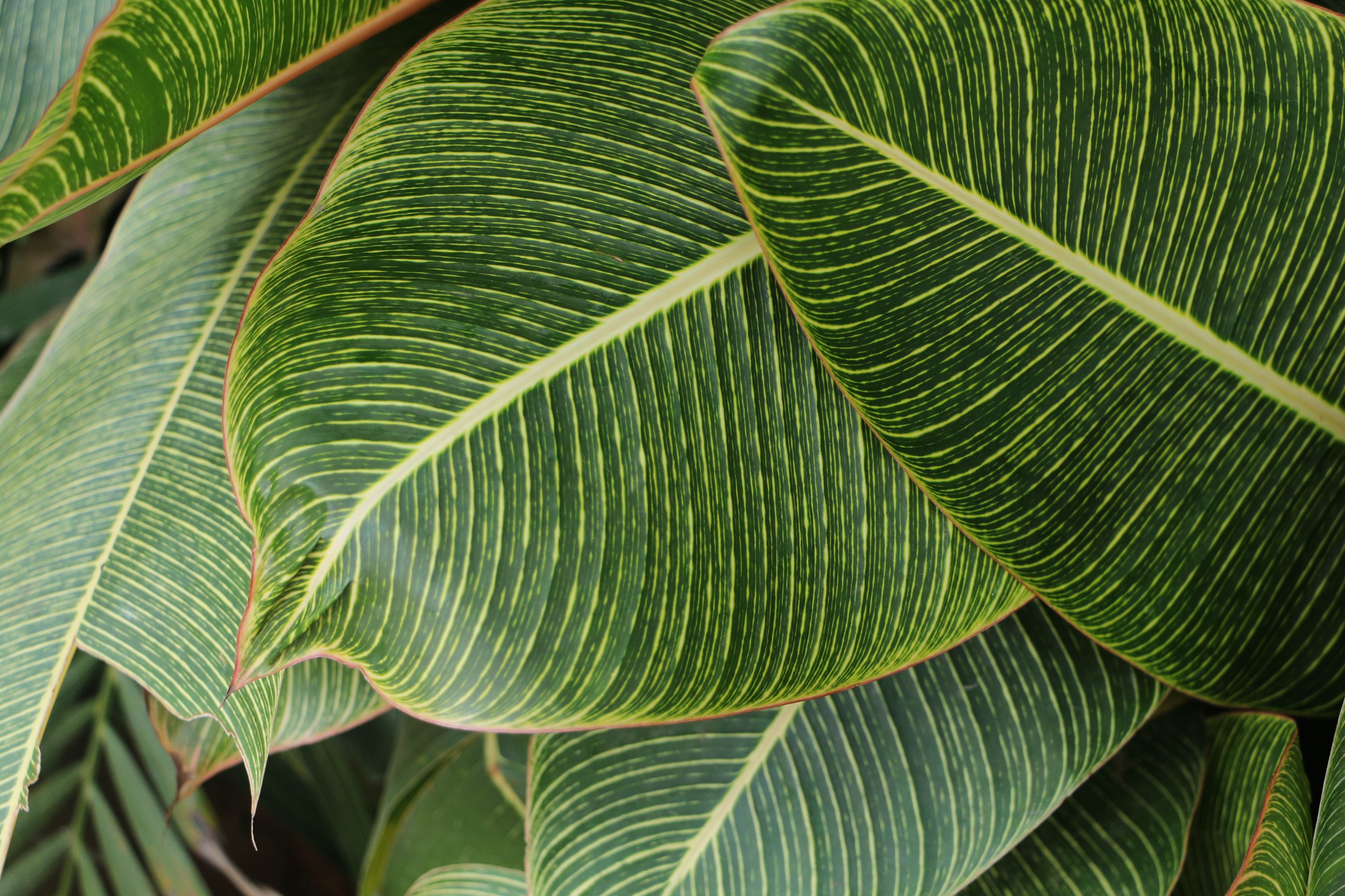 Black And White Leaf Wallpaper Green Leaf Plant 183 Free Stock Photo