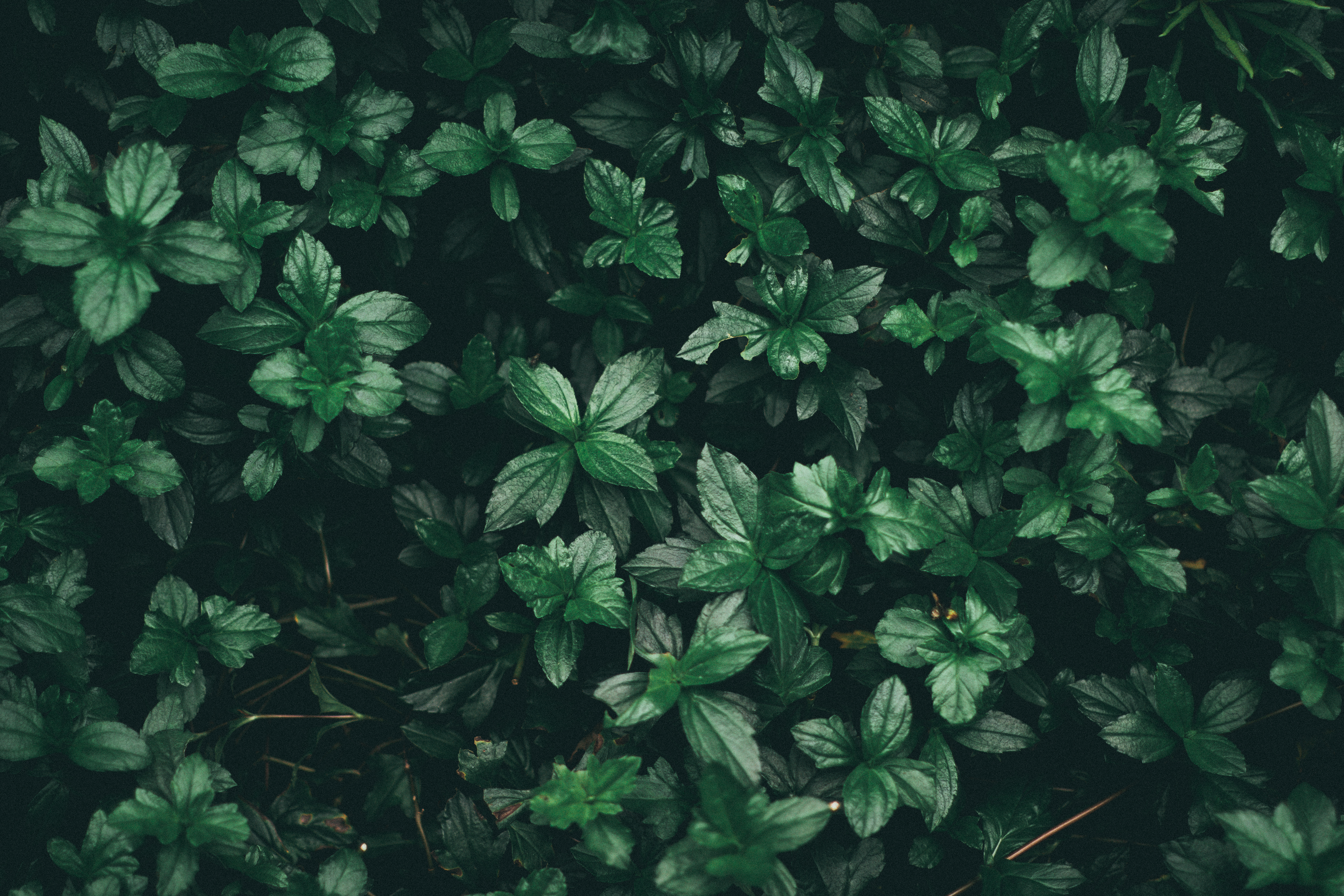 Green Forest Wallpaper Hd 1000 Great Leaves Photos 183 Pexels 183 Free Stock Photos