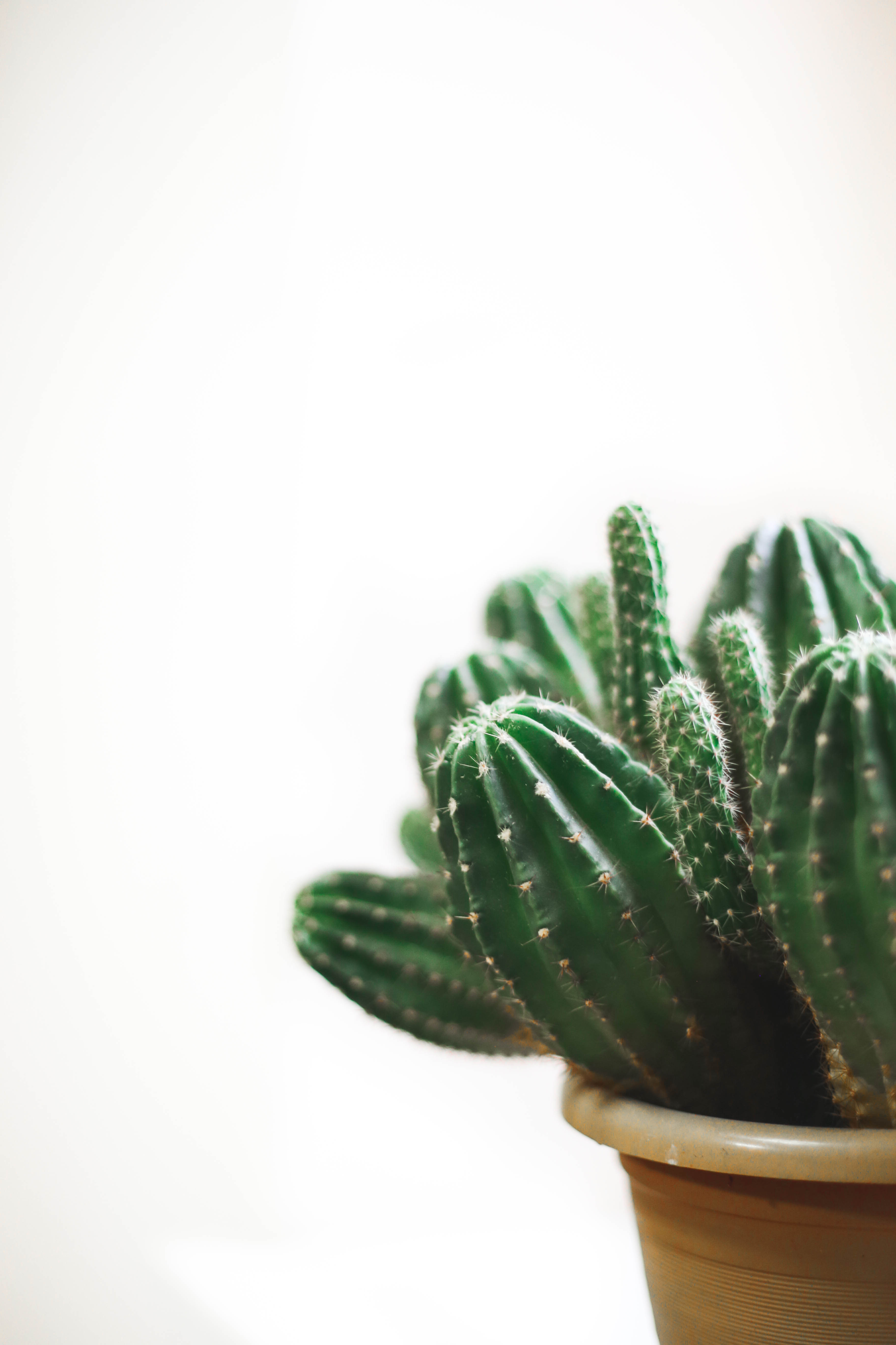 Samsung Mobile Wallpaper Hd Download Cactus Plant On Brown Pot 183 Free Stock Photo