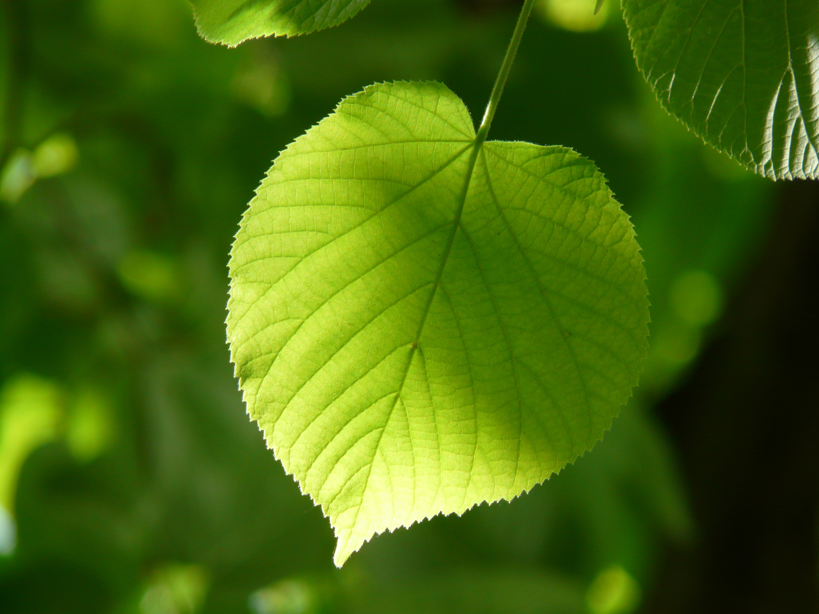 Iphone X Wallpaper Hd 4k Green Leaf Close Up Photography 183 Free Stock Photo