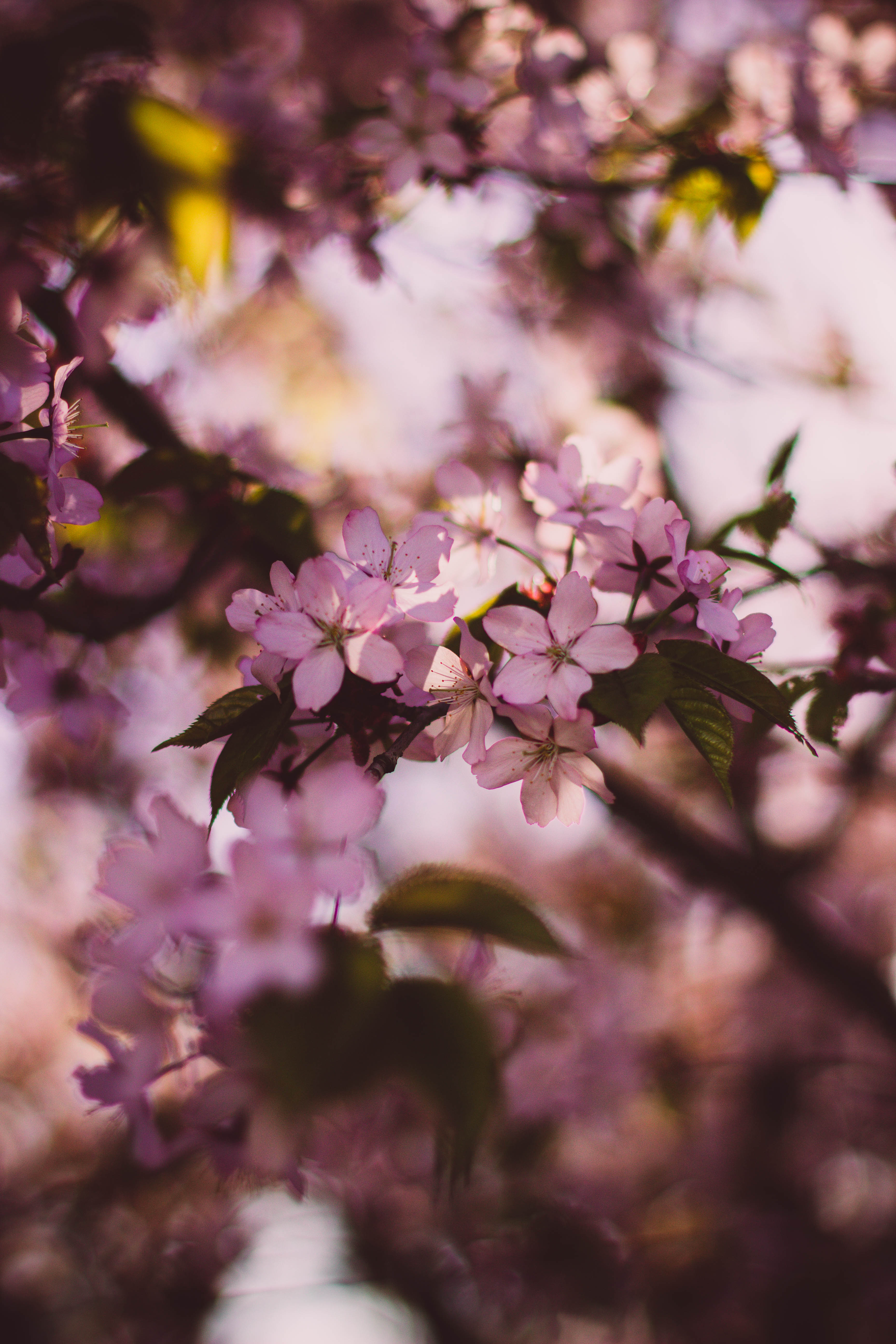 Instagram Car Wallpapers Free Stock Photo Of Flowers Nature Spring