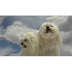 Pretty Car Dogs Yawn Nuzzle Blue Sky Clouds Background Hi Res Why Do Dogs Yawn When Stressed Why Do Dogs Yawn