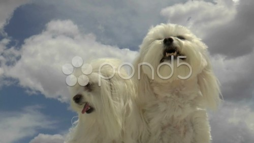 Medium Of Why Do Dogs Yawn