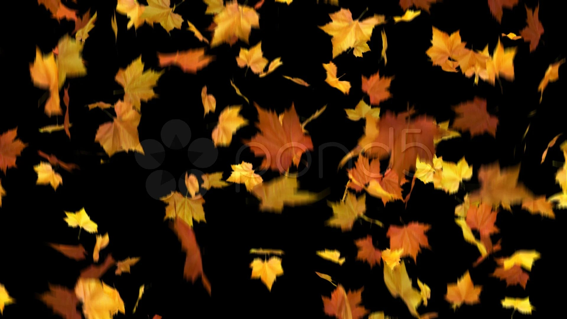 Free Animated Falling Leaves Wallpaper Falling Leaves Masked 3d Animation Loop Clip 715062