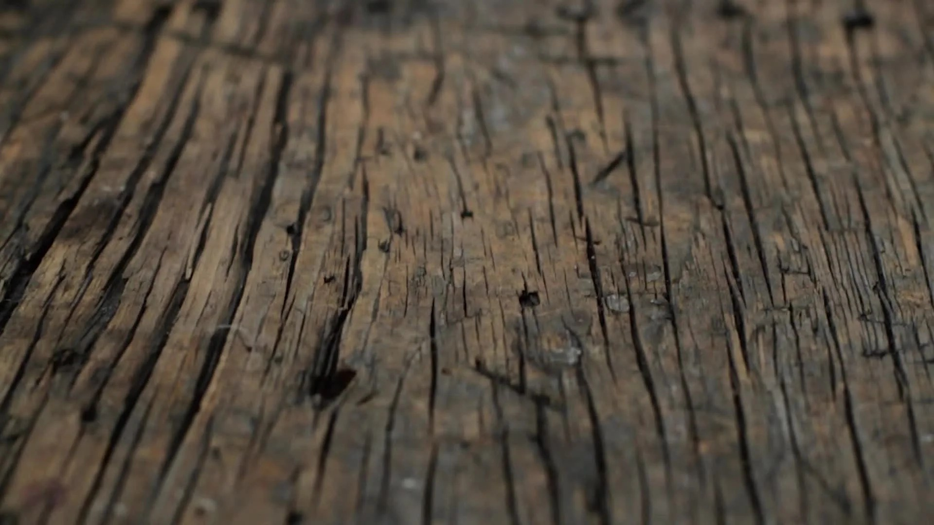 3d Virus Wallpaper Video Primitive Driftwood Texture Rough Wood Surface