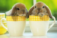 16 Tiny Animals in Teacups Will Make You Squeal with Joy ...
