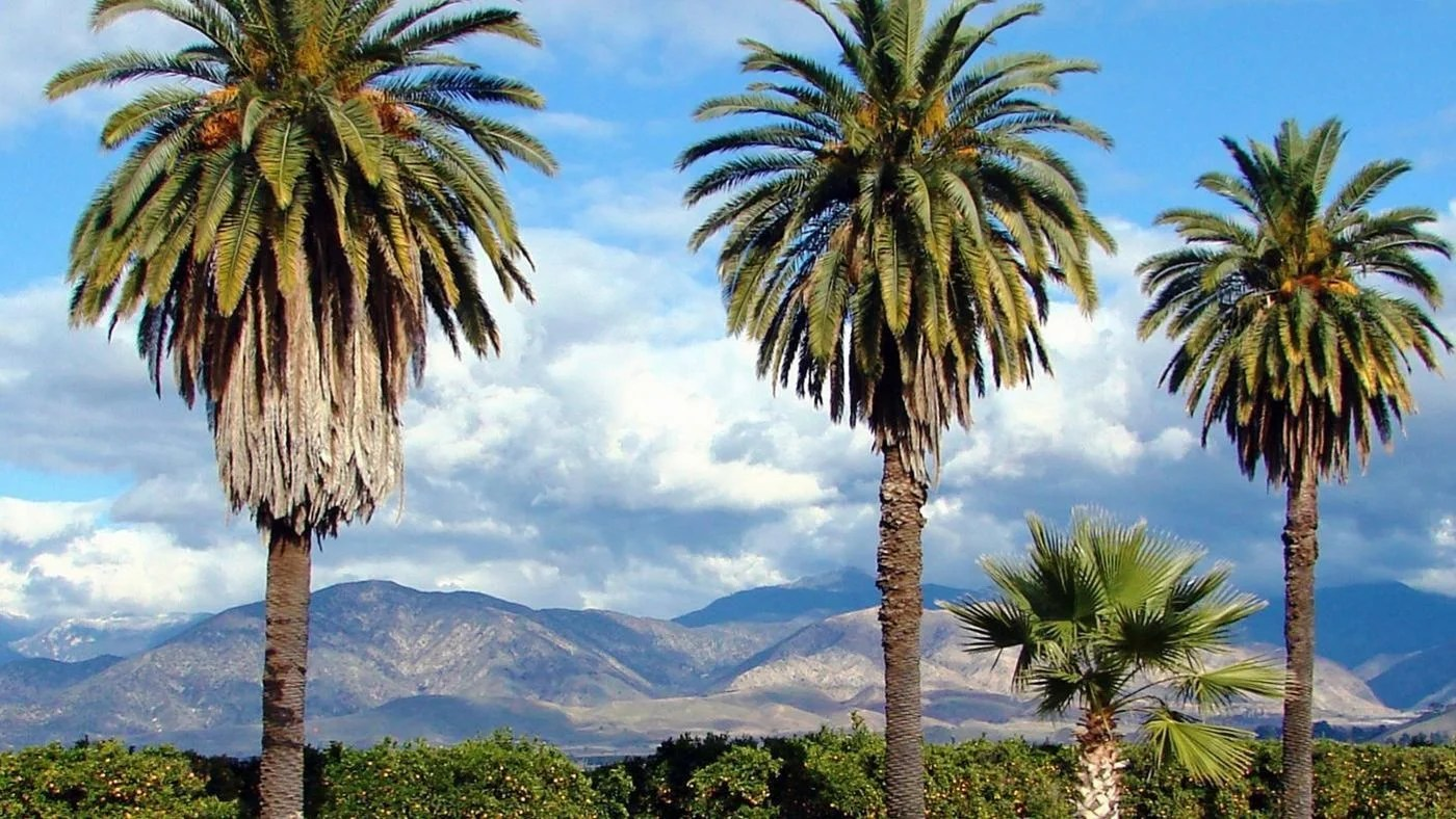 What Are Some Different Types Of Palm Trees Referencecom