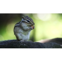 Small Crop Of Get Rid Of Chipmunks