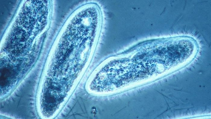 How Do Protists Get Energy? Reference