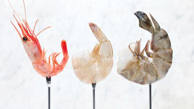 All About Shrimp Ricardo