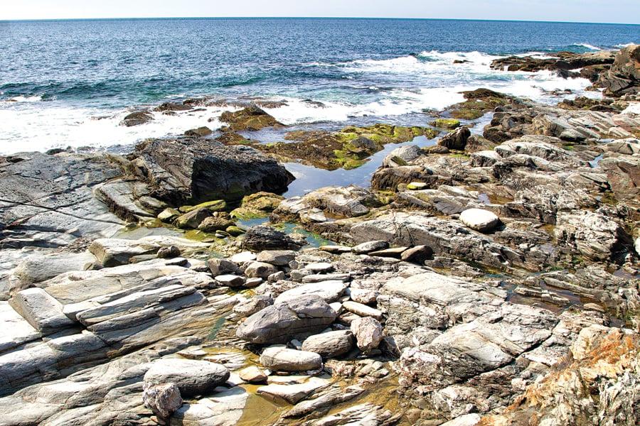 Tide Pool Treasures - Rhode Island Monthly