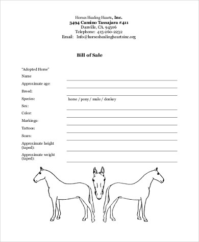 Horse Bill of Sale Samples - 8+ Free Documents in Word, PDF - bill of sales forms