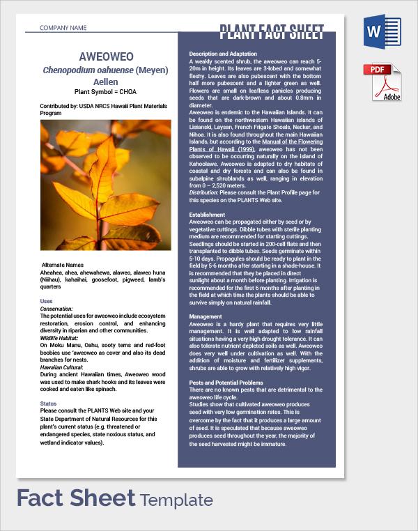 Doc600762 Fact Sheet Template Word Fact Sheet Template 15 – Microsoft Word Fact Sheet Template