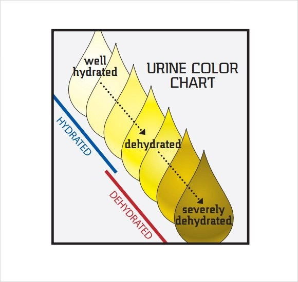 Sample Urine Color Chart newyearoltestinfo
