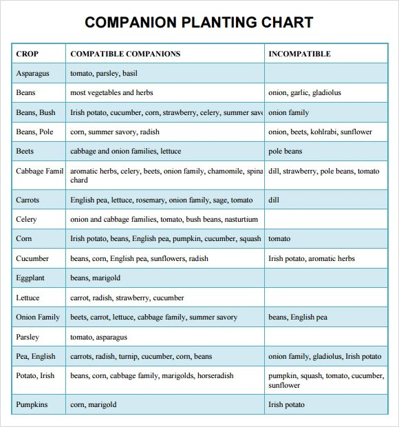 Sample Companion Planting Chart - 9+ Documents In PDF, Word