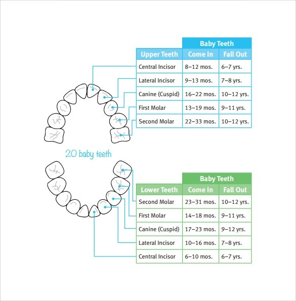 6+ Sample Baby Teeth Chart Templates Sample Templates