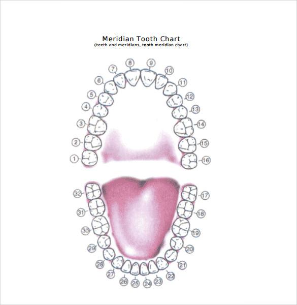 Beaufiful Diagram Of Teeth Images Gallery -- Teeth Labeled Diagram