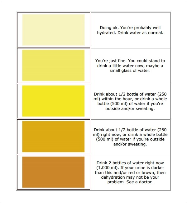 Sample Chart Template - Download Free Documents in PDF , Word ,Excel - general color chart template