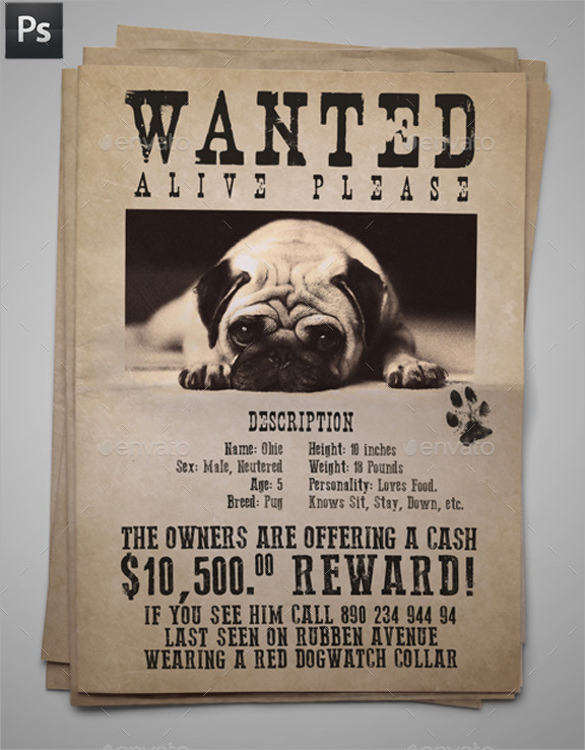 8+ Lost Dog Flyer Templates Sample Templates